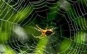 symbolisme de l'araignée en rêve islam