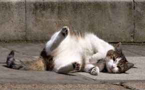 rêver de tuer un chat en islam